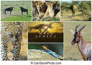 africano, animali selvaggi