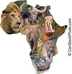 africano, mamíferos salvajes, en, un, áfrica, collage