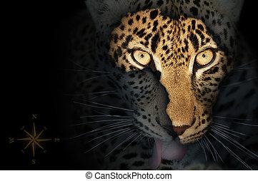 africano, mapa, en, leopardo