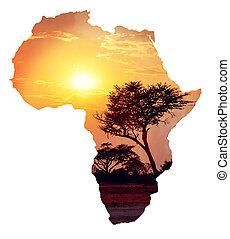 africano, ocaso, con, acacia, mapa, de, áfrica, concepto