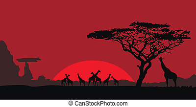 africano, paisagem, girafas