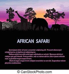 africano, safari, cartaz
