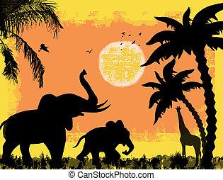 africano, safari, tema