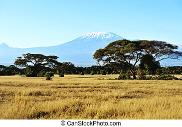 africano, savana, in, kenia