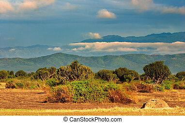 africano, savanna