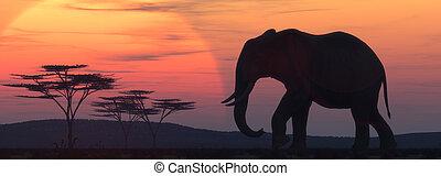 africano, silueta, elefante