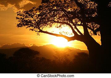 africano, sunset., tanzania, áfrica
