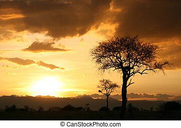 africano, sunset., tanzania, africa
