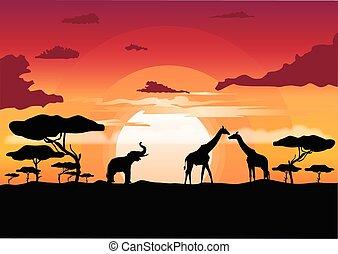 africano, tramonto, in, il, savana, con, silhouette, di, animali