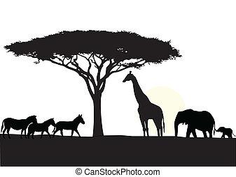 afrika, bakgrund, silhuett