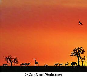 afrika, djuren, solnedgång, illustraion