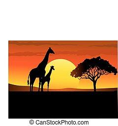 afrika, solnedgång, safari