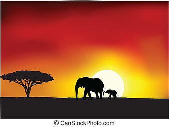 afrika, solnedgang