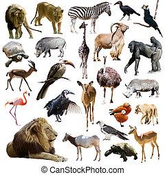 afrikaan, dieren, leeuwen, anderen