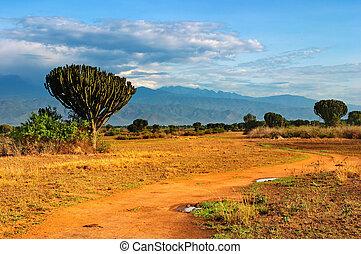 afrikaan, savanne