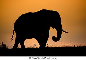 afrikaan, silhouette, elefant