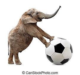 afrikaan, voetbal, elefant