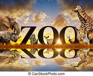 afrikaan, woord, animals.