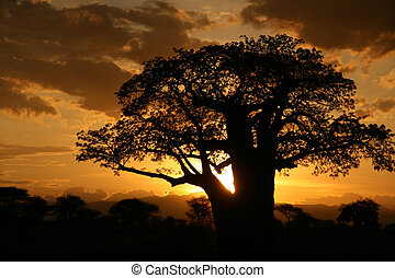 afrikai, sunset., tanzánia, afrika