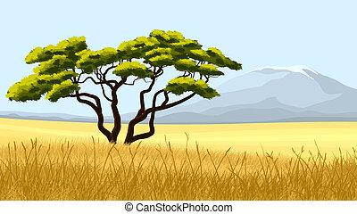 afrikanisch, gras, gelber , acacia.