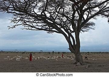 afrikanisch, lanscape, mit, masai.