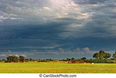 afrikanisch, savanne