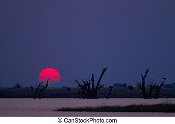 afrikanisch, sonnenuntergang