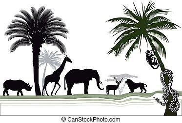 afrikanisch, tierwelt