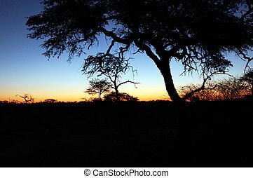 afrikansk, solnedgang