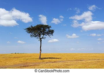 afrikas, baum landschaft