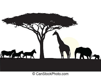 afrikas, hintergrund, silhouette