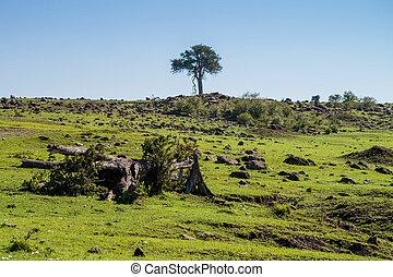 afrikas, savanne