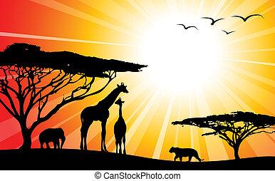 afrikas, silhouetten, -, /, safari