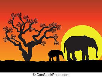 afrique, éléphants