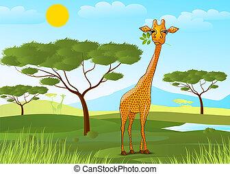 afrique, feuilles, girafe, manger, coucher soleil