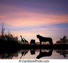 afryka, lio, sylwetka, safari