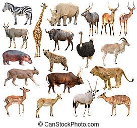 afryka, zwierzęta