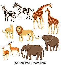 afrykanin, komplet, animals., sawanna