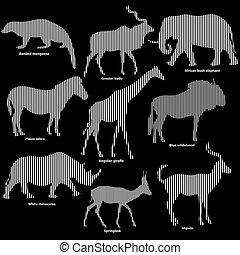 afrykanin, komplet, odizolowany, sylwetka, zwierzęta