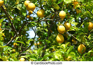 afsluiten, citroen, op