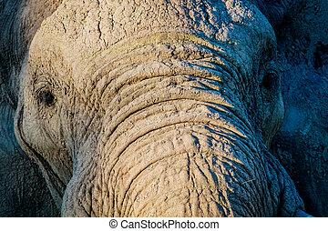 afsluiten, elefant, chobe., op