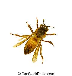 afsluiten, honing, honingraat, op, bij