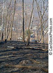 After forest fire 1