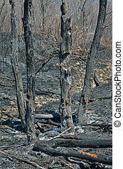After forest fire 12
