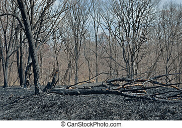 After forest fire 13