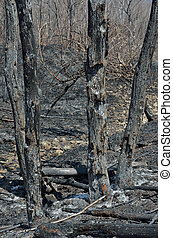 After forest fire 15
