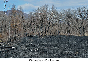 After forest fire 18