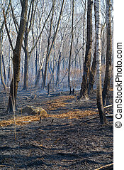 After forest fire 4
