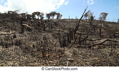 After Forest Fire. - Ashes after a fire in the forest. Burnt...