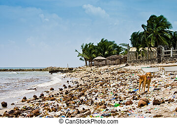 Stray hungry dogs on a beach littered with coconuts and other debris following a typhoon that struck the Philippines.